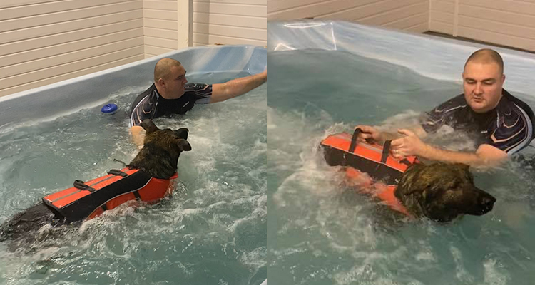 Canine Hydrotherapy Pool